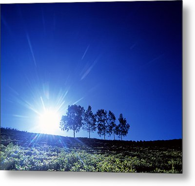 Silhouette With Trees In Sparse Field Metal Print