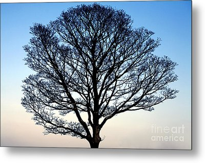 Silhouetted Tree Metal Print