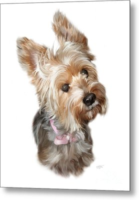 Silky Terrier Metal Print by Paul Tagliamonte