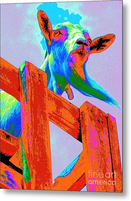 Metal Print featuring the photograph Silly Billy In Many Colors Photo Impressionism by Annie Zeno