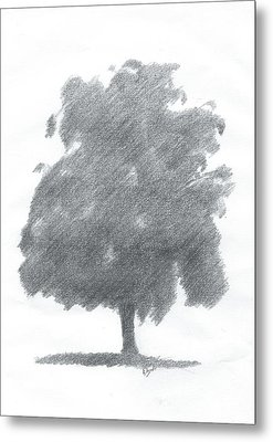 Silver Birch Drawing Number Two Metal Print by Alan Daysh