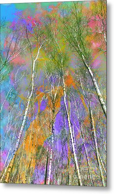 Silver Birch Metal Print by Michelle Orai