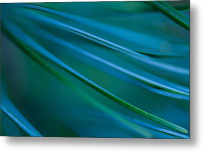 Metal Print featuring the photograph Silver Pine by Jacqui Boonstra