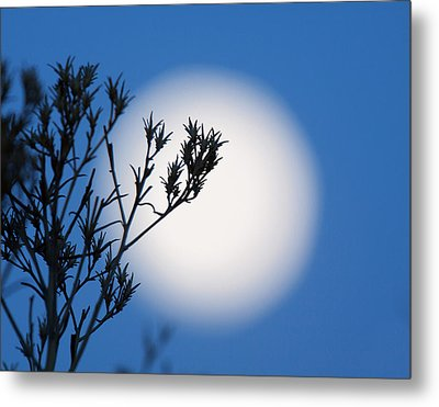 Metal Print featuring the photograph Silver Sage by Jim Garrison
