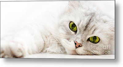Metal Print featuring the photograph Silver Shaded Persian by Carsten Reisinger