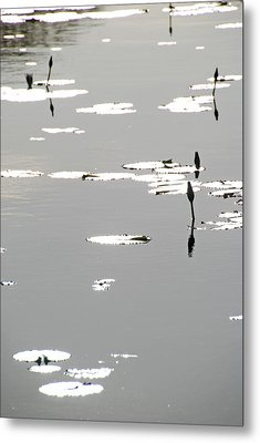 Metal Print featuring the photograph Silvery Lotus by Ankya Klay