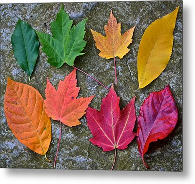 Similar But Different Metal Print by Frozen in Time Fine Art Photography