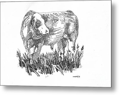 Simmental Bull Metal Print by Larry Campbell