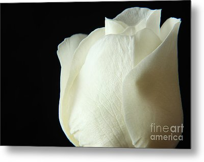 Simple Beauty Metal Print by Eden Baed