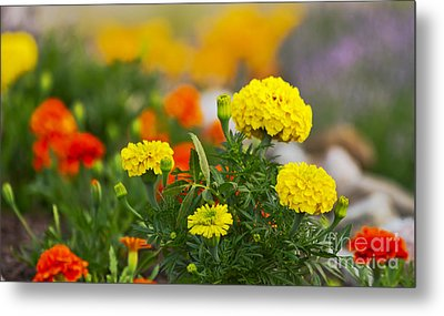 Simple But Beauitful Metal Print by Timothy J Berndt