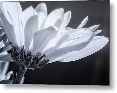 Simple Charm Metal Print by Maria Robinson