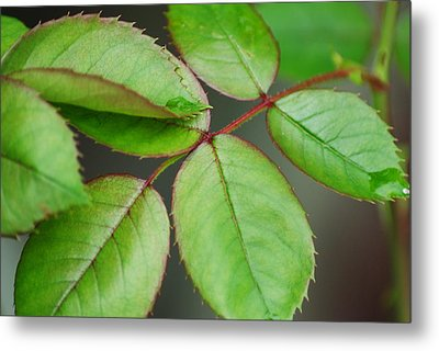 Simple Elegance Metal Print by Frozen in Time Fine Art Photography