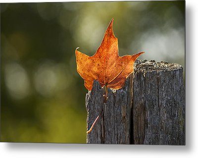 Simply Autumn Metal Print by Penny Meyers