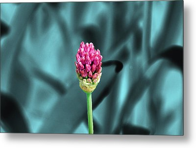 Simply Beautiful Metal Print by Aimee L Maher Photography and Art Visit ALMGallerydotcom