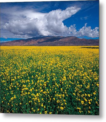 Metal Print featuring the photograph Simply Beautiful by Yue Wang