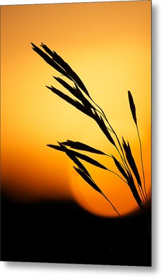Simply Natural Metal Print by Penny Meyers