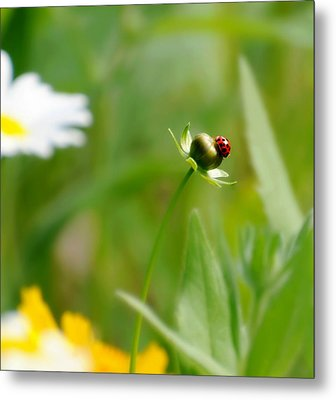 Simply Red Metal Print by Diana Angstadt