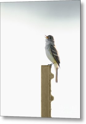 Metal Print featuring the photograph Singing Flycatcher by Anita Oakley