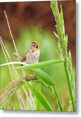 Singing For A Companion Metal Print by I'ina Van Lawick