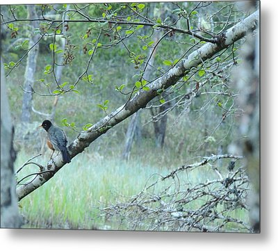 Metal Print featuring the photograph Singing In The Trees by Karen Horn