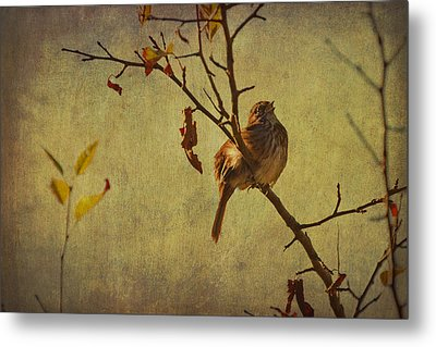 Metal Print featuring the photograph Singing Sparrow by Peggy Collins
