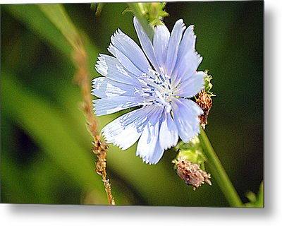 Single Blue Flower Metal Print by Stephanie Grooms