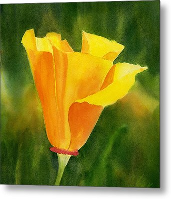 Single California Poppy Metal Print