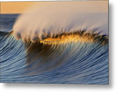 Metal Print featuring the photograph Single Crest Mg_8700 by David Orias