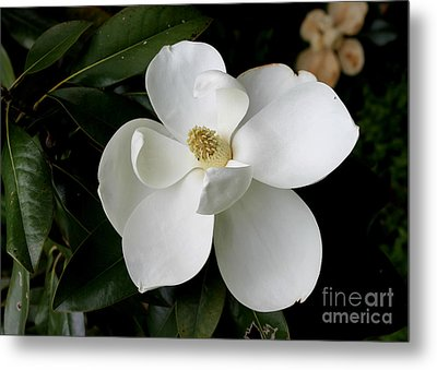 Single Magnolia II Metal Print