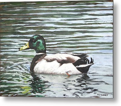 Single Mallard Duck In Water Metal Print by Martin Davey