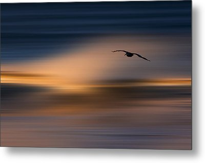 Metal Print featuring the photograph Single Pelican  73a1102 by David Orias