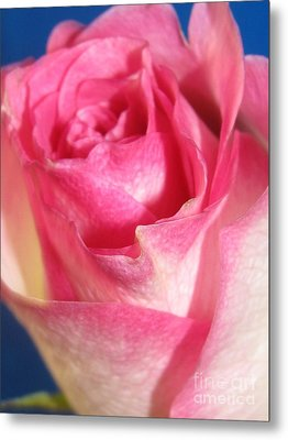 Metal Print featuring the photograph Single Pink Rose 2 by Margaret Newcomb
