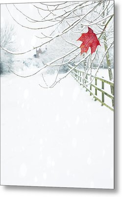 Single Red Leaf Metal Print by Amanda Elwell