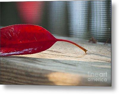Single Red Leaf Metal Print by Terry Rowe