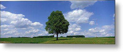 Single Tree, Germany Metal Print by Panoramic Images