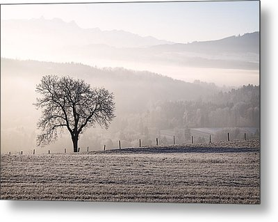 Single Tree In The Mist Metal Print by Dominique Dubied
