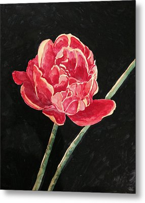 Single Tulip On Black Background Metal Print
