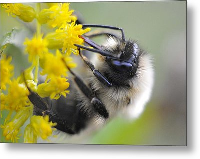 Sipping Bee Metal Print