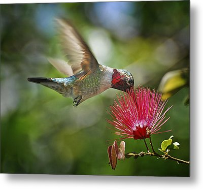 Sipping The Nectar Metal Print