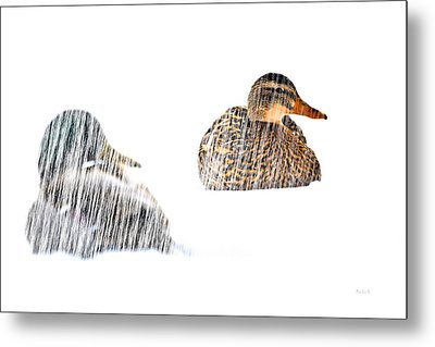 Sitting Ducks In A Blizzard Metal Print