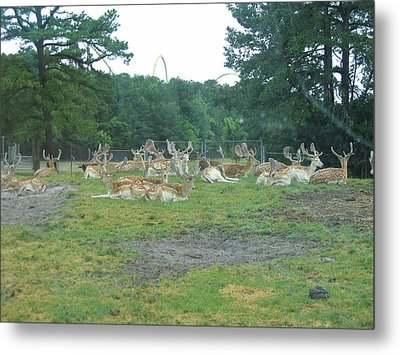 Six Flags Great Adventure - Animal Park - 121216 Metal Print by DC Photographer