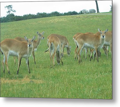 Six Flags Great Adventure - Animal Park - 121242 Metal Print by DC Photographer