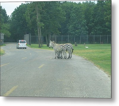 Six Flags Great Adventure - Animal Park - 121248 Metal Print by DC Photographer
