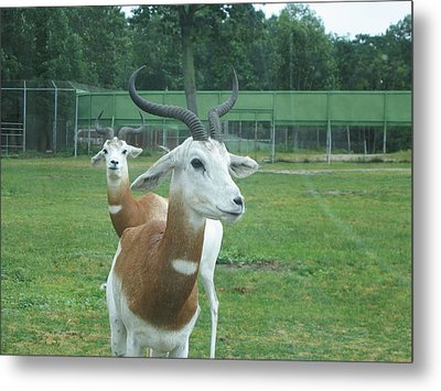 Six Flags Great Adventure - Animal Park - 121250 Metal Print