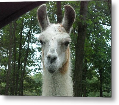 Six Flags Great Adventure - Animal Park - 121279 Metal Print by DC Photographer