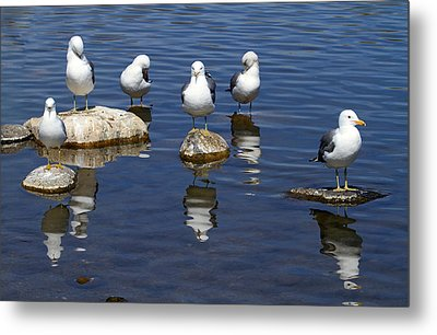 And Then There Were Six Metal Print by Donna Kennedy