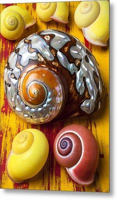 Six Snails Shells Metal Print by Garry Gay