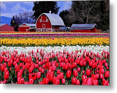 Skagit Valley Metal Print by Benjamin Yeager
