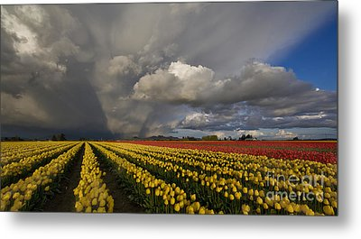 Skagit Valley Storm Metal Print by Mike Reid
