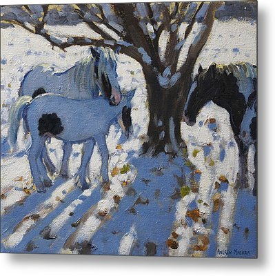 Skewbald Ponies In Winter Metal Print by Andrew Macara